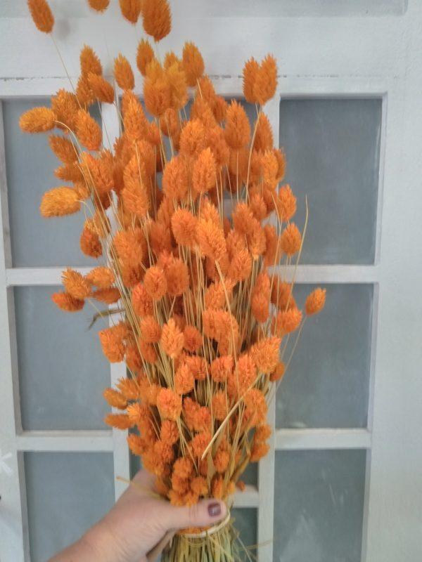 boeket droogbloemen orange